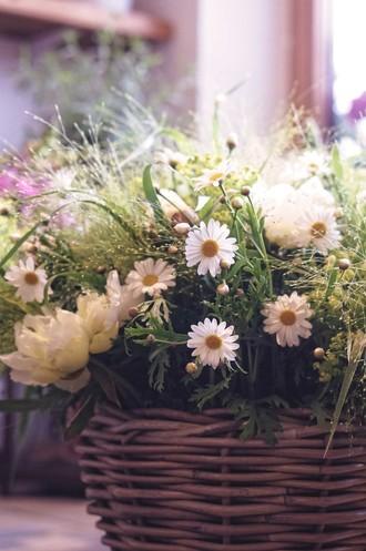Blumen Baier