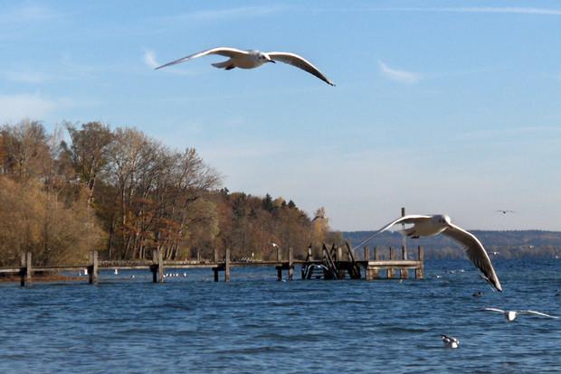 Möwen am Starnberger See